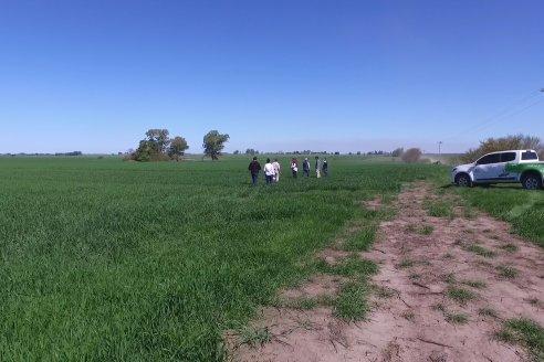 Ensayo de Trigo - Coop.Agric.Mixta La Protectora Ltda. - Colonia La Buena Vista, Dpto Gualeguay