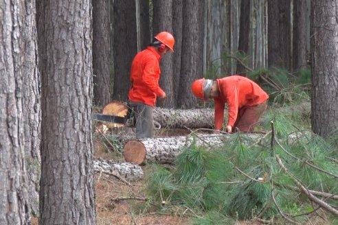 La provincia ratifica su estrategia de desarrollo forestal sustentable