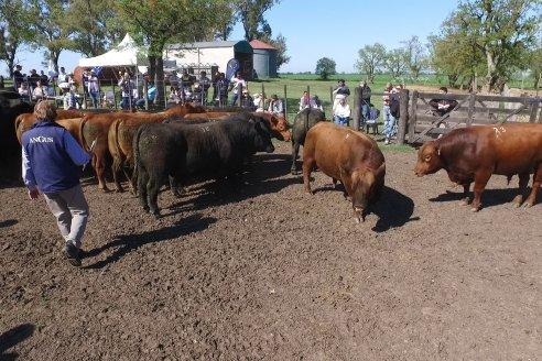 3ra.Jura Fenotípica de la 6ta. Prueba Pastoril Angus del Litoral - Estancia San Esteban - Ramirez, Entre Ríos