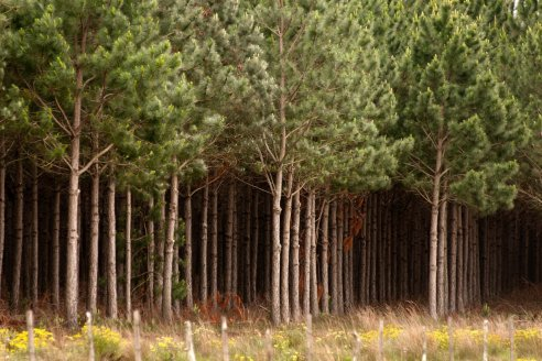 1.000 millones de árboles para el 2030